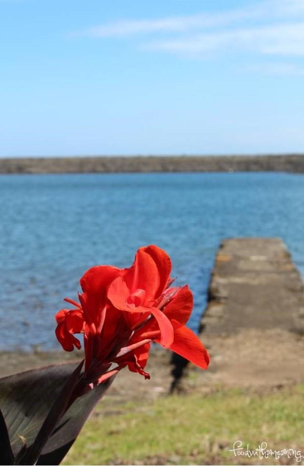 Caldeira da Fajã de Santo Cristo_ilha de São Jorge